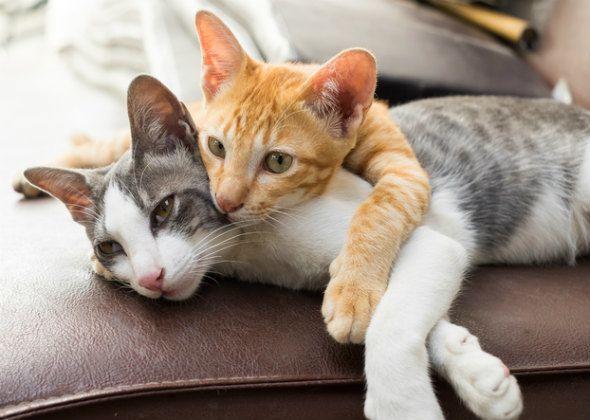 5 आम बिल्ली व्यवहार मिथकों खारिज