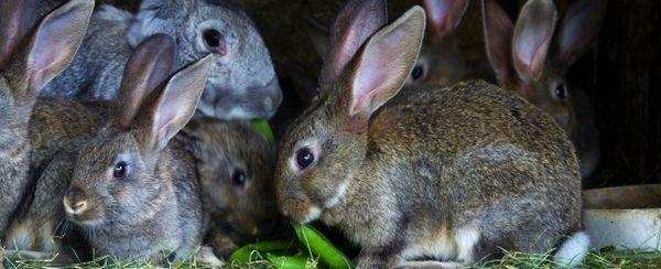 खरगोशों में व्यवहार की समस्याओं