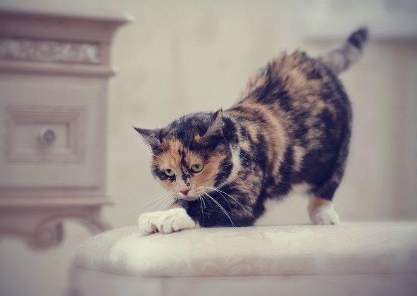 बिल्ली व्यवहार मिथकों: 5 अधिक डीकोड