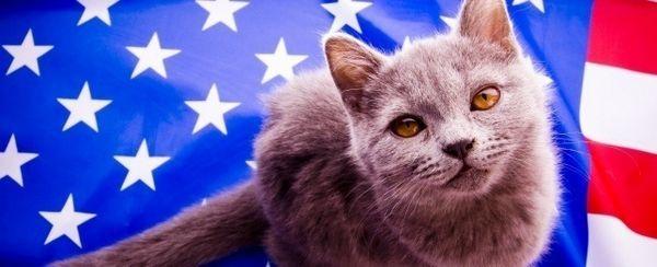 देशभक्ति बिल्लियों के लिए महान नाम