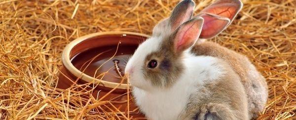 घर का बना खिलौने अपने खरगोश प्यार करेंगे