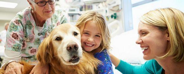 चिकित्सा जानवरों की अद्भुत काम का सम्मान