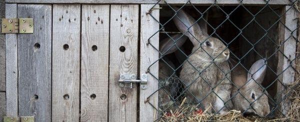 एक खरगोश के पिंजरे का निर्माण कैसे