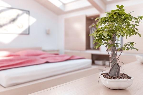 एक बेडरूम फेंग शुई शैली को सजाने के लिए कैसे