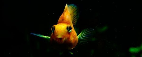 शीर्ष 20 मीठे पानी में मछली