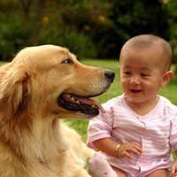 अपने नवजात शिशु के लिए अपने कुत्ते को तैयार कर रहा है