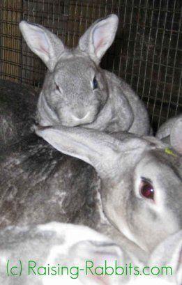 बच्चे खरगोश स्थापना