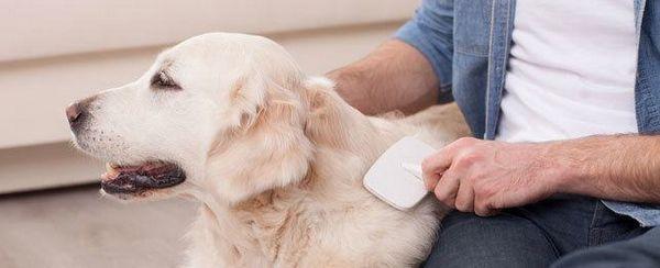तो ताजा और इतने साफ: शीर्ष सौंदर्य अपने कुत्ते के लिए सुझाव