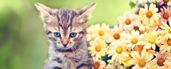 वसंत से प्रेरित बिल्ली के नाम