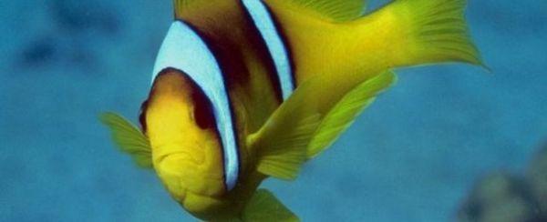 एक मछली के बाहरी शरीर रचना विज्ञान