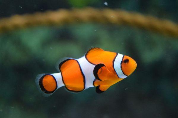 छुट्टी के दौरान कार्यालय मछली के साथ क्या करना है